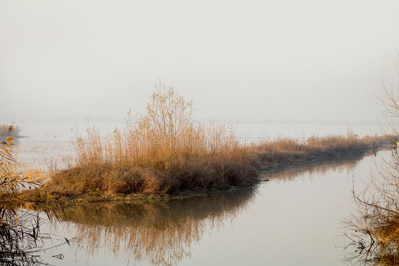 Morning mist over, lake royalty free stock image