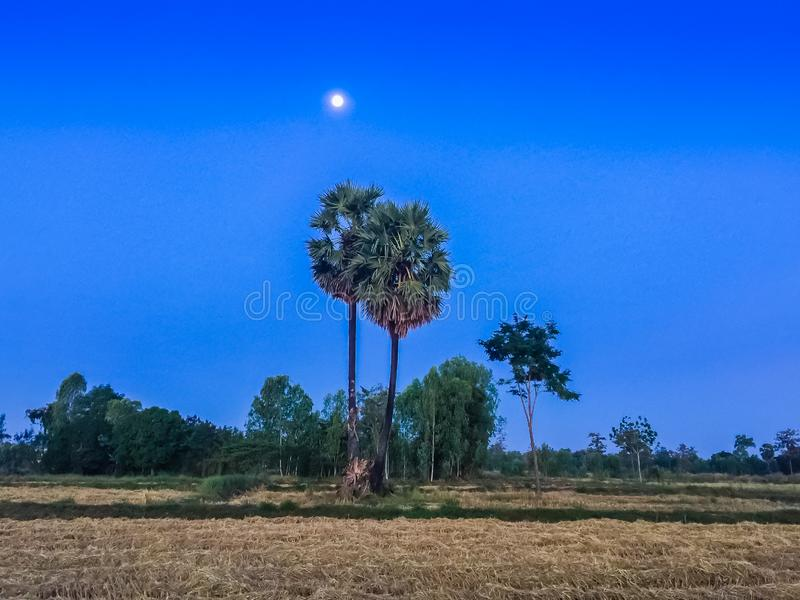 Morning moon in the rice field after harvested. A Moon landing is the arrival of a spacecraft on the surface of the Moon royalty free stock images