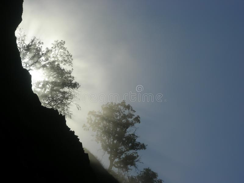 Morning Mist in the Trees. Sunlight filters through oak trees in the morniing mist on a steep mountain side royalty free stock photo