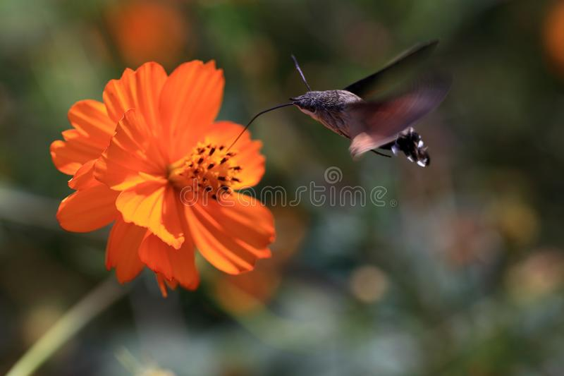 Moth flower scenery naturally fluttering beautiful royalty free stock images