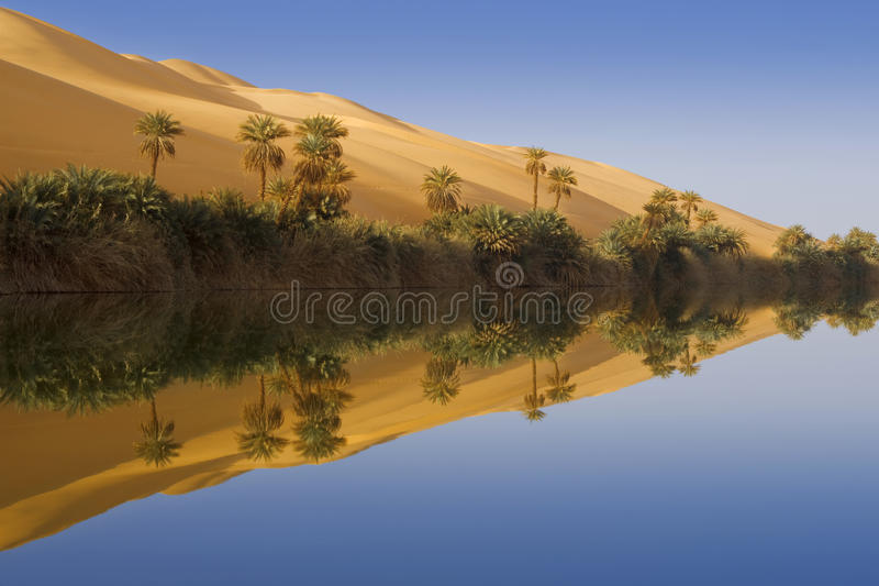 Morning in an oasis. Libyan Desert. Sandy dunes and lake of salty water stock images