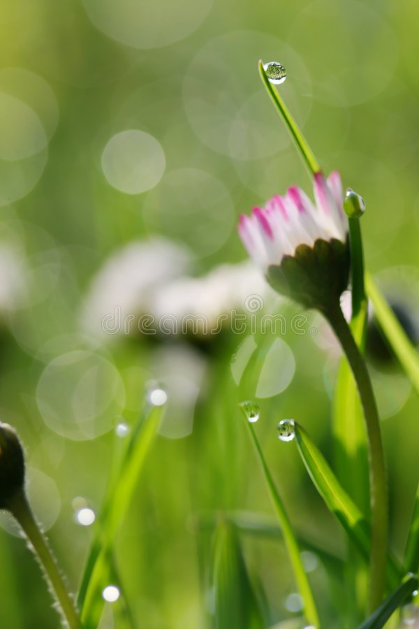 Free Morning On Meadow Stock Photo - 5195170