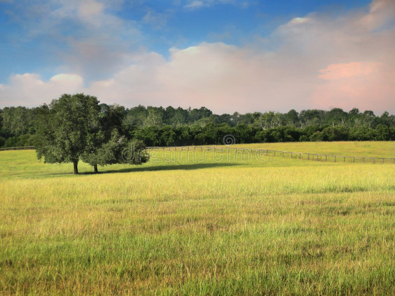 Morning pasture. Pasture land and hay field with fence line in the early morning with a soft pinkish cloudy sky stock photography