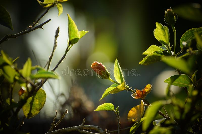 Growing flower blur background stock photography