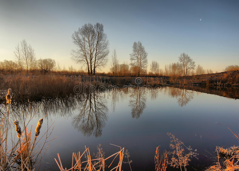 Morning on a pond