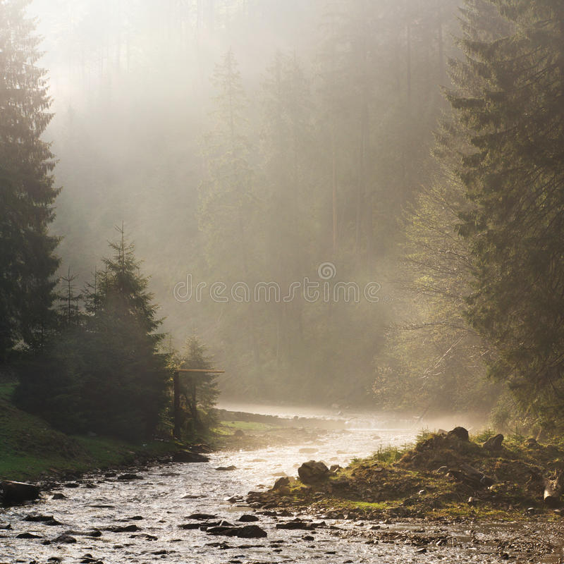 Morning ray of light on the river. Carpatian spring royalty free stock photo