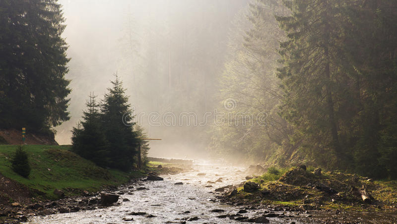 Morning ray of light on the river. Panorama. Morning ray of light on the river. Carpatian spring royalty free stock photography