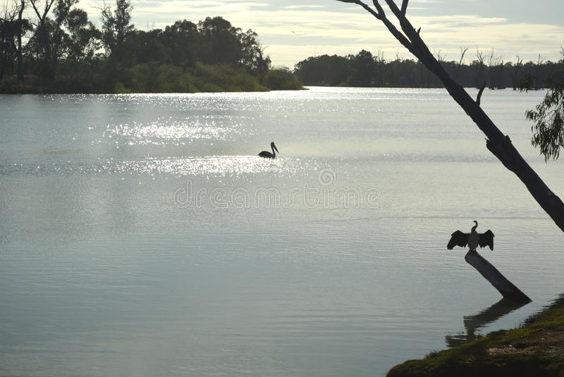 Morning river birds royalty free stock photography