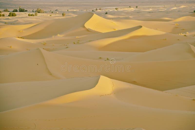 Morning in Sahara royalty free stock photos