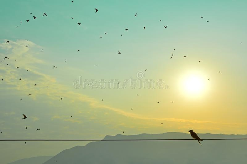 Morning scene with  silhouettes of swallows royalty free stock images