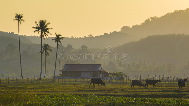 morning scene at the village royalty free stock images
