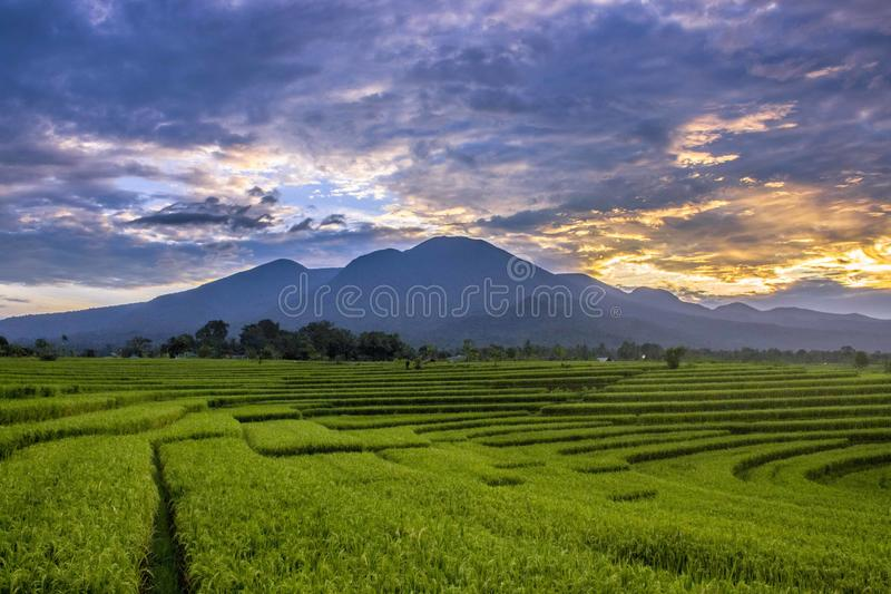 Morning sky at rice fields in north bengkulu indonesia, beauty nature color and time in the morning, simple shoot with amazing pla. Ce stock photos