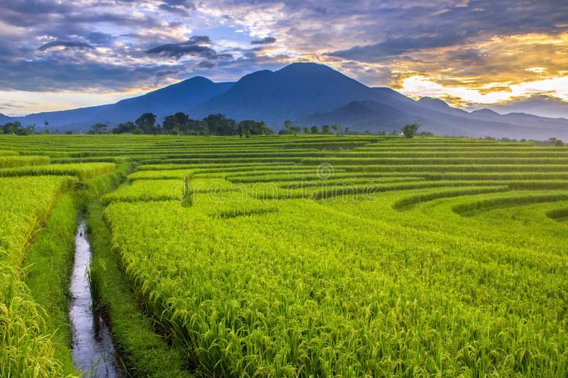 Morning sky at rice fields in north bengkulu indonesia. Beauty nature color and time in the morning, simple shoot with amazing place royalty free stock photography