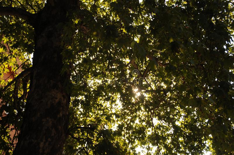 Morning& x27 ; soleil de s entre Bristol& x27 ; arbre de s photographie stock