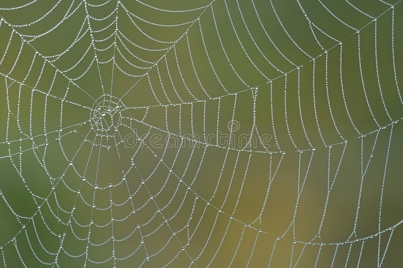 Morning spiderweb. With water drops