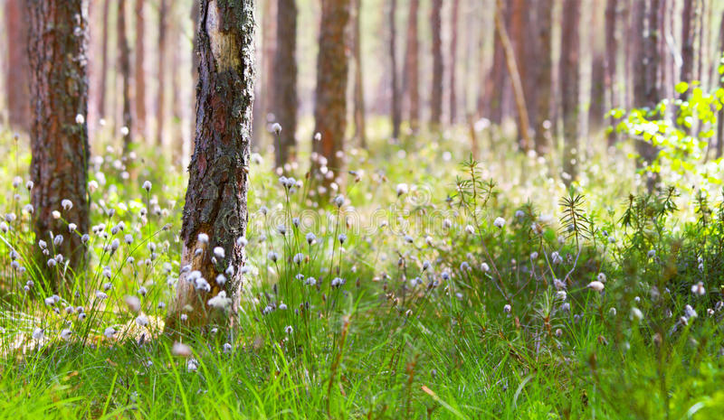 Morning in spring forest stock photography