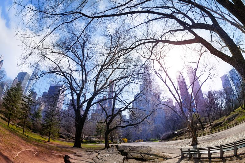 Morning spring view of New York from central park stock images