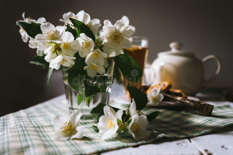 Morning still life with fresh jasmine flowers stock photo