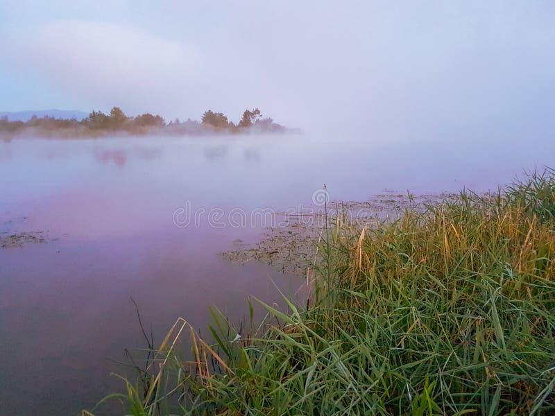 Misty foggy lake. Morning summer nature misty foggy white scene royalty free stock photo