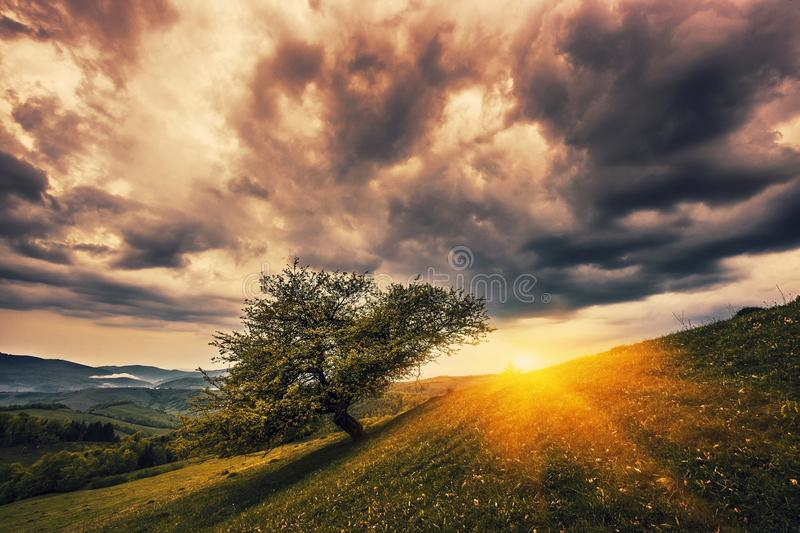 Morning summer sunrise image, alone tree on meadow in mountains on background dramatic cloudy sky and first rays of sun, breathtak stock photography