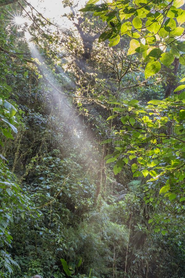 Morning sun burst and rays against the misty morning in the jungle. At the Costa Rica`s Cloud Forest Reserve royalty free stock image