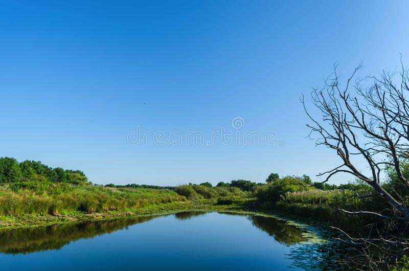 Morning sun enters the deciduous forest surrounded by mist floating over the water royalty free stock photo