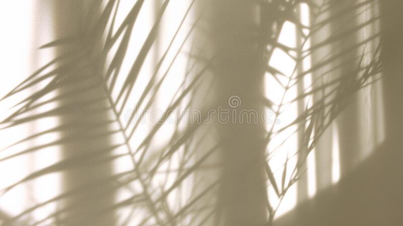 3 369 Tropical Leaves Transparent Background Photos Free Royalty Free Stock Photos From Dreamstime Download as svg vector, transparent png, eps or psd. dreamstime com