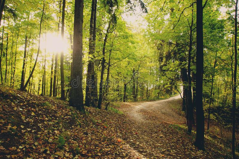 The morning sun makes its way onto a path covered with leaves in a park.  stock images