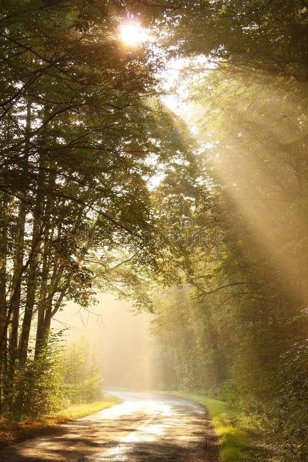 Free Morning Sun Rays Fall On The Forest Road Stock Photography - 11115342