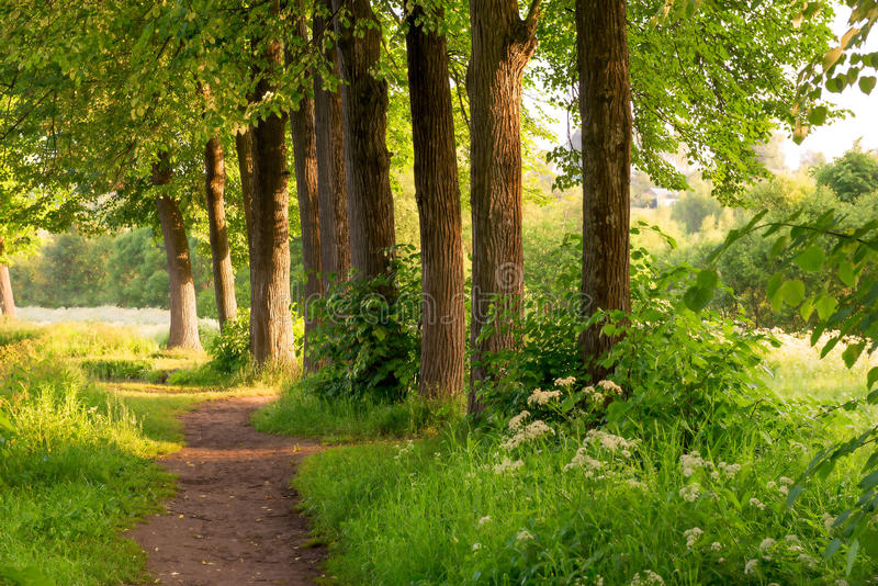 Morning sun rays illuminate the nature. Morning sun rays illuminate the beautiful nature royalty free stock photography