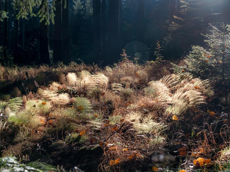 Backlit forest plants in autumn time stock photo