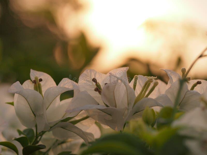 Morning sunlight stock photography