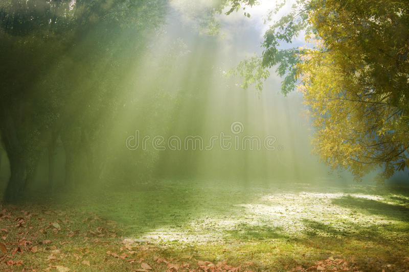 Morning sunlight breaking through the fog. In an autumn park stock photos