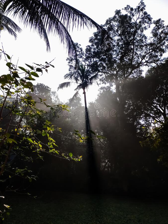 In the morning, sunlight is falling to the ground through the gap of coconut trees. Etc stock photography