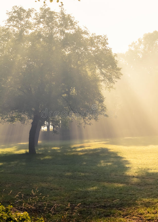 Download Morning sunlight falls . stock image. Image of country - 33346203