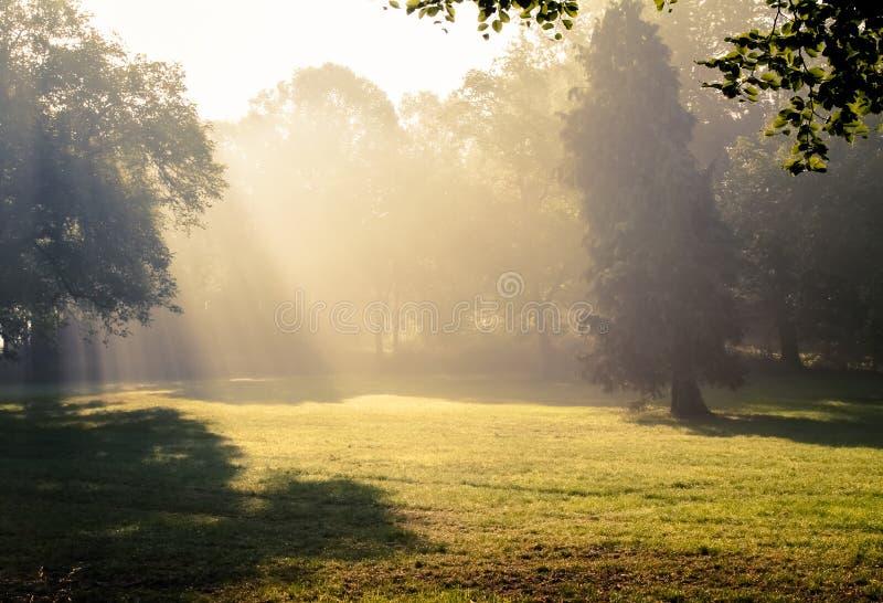 Download Morning sunlight falls . stock photo. Image of mystic - 33346266