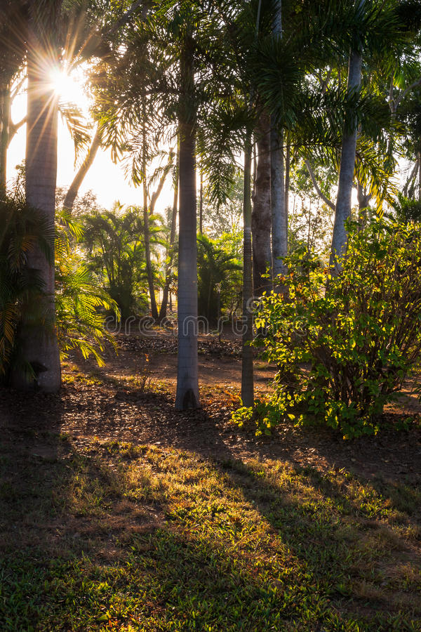 Morning sunlight in between the trees stock images