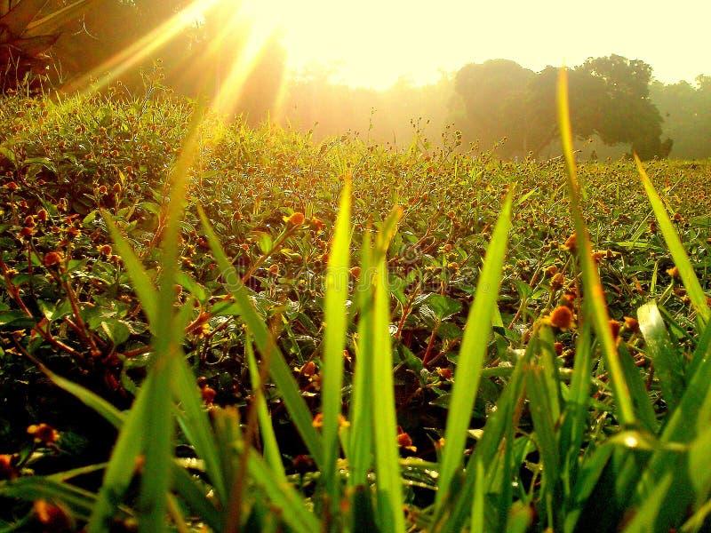 Sunrise. Morning sunrise when a new day start stock photos