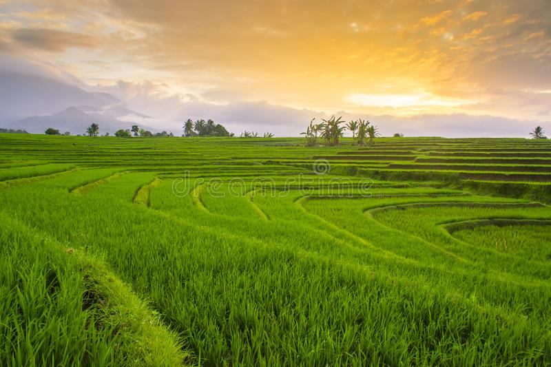 Morning sunrise at paddy fields in north bengkulu royalty free stock photos