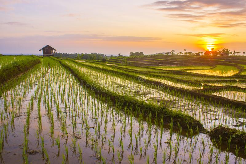Morning sunrise at paddy fields in north bengkulu stock images
