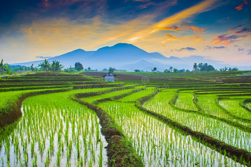 Morning sunrise at paddy fields in north bengkulu stock photo
