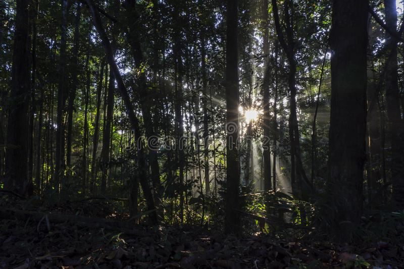 Morning sunrise passes through the forest stock photography