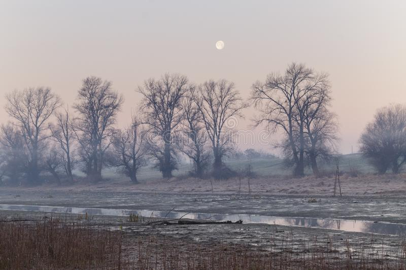 Morning in swamp. šodroš branch of Danube river. There is stream of water in front and trees in background. Landscape stock photography