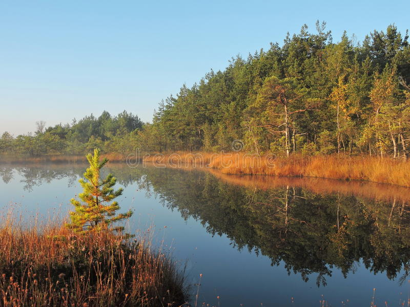 Morning in swamp, Lithuania stock image