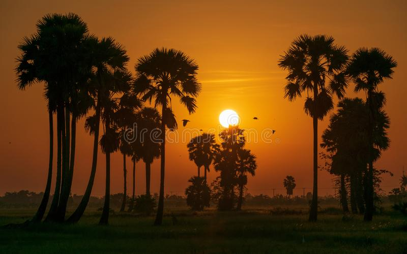 Morning in the Thai. royalty free stock images