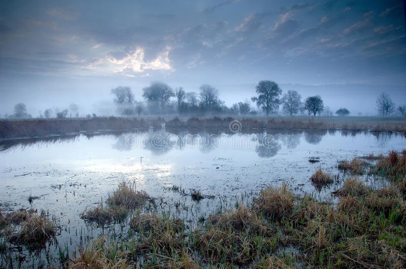 Morning time in swamp area royalty free stock image