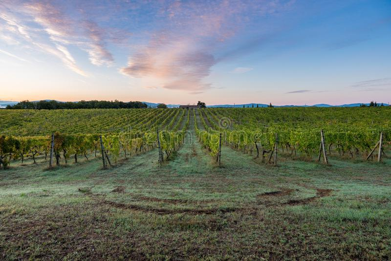 Sunrise on the field in Toscany vine vineyard line sky clouds morning stock image