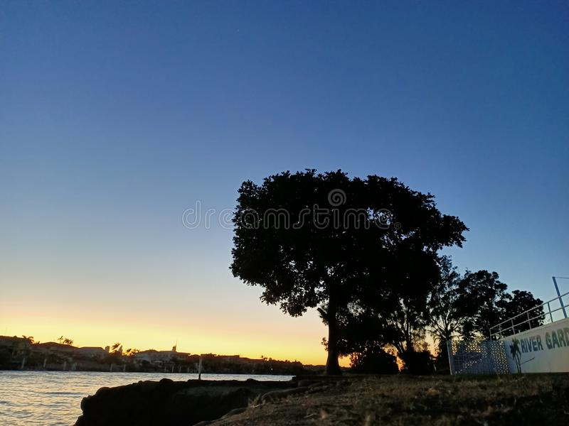 Morning tree cold sunrise stock photo