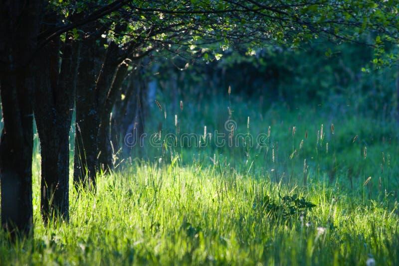 Morning tree row stock photography