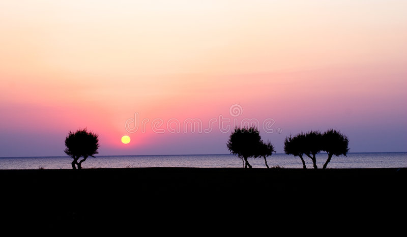 Morning trees. And sunrise on the sea royalty free stock photos